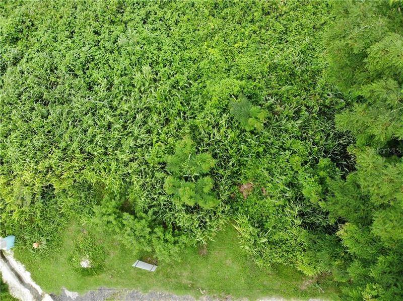 Land for Sale at PR 125 BO. VOLADORAS Moca, Puerto Rico 00676 Puerto Rico
