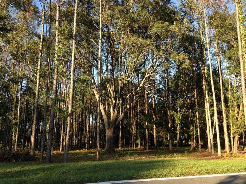 7. Land for Sale at 17028 MIDAS LANE Lutz, Florida 33549 United States